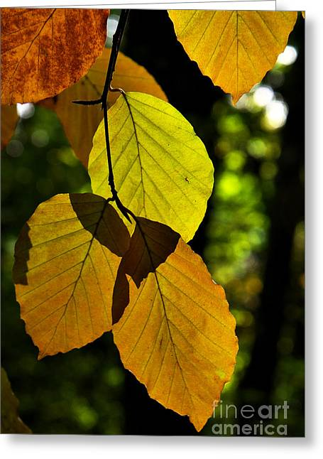 Autumn Beech Tree Leaves Greeting Card