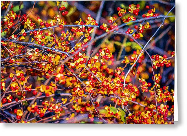 Climbing Bittersweet Cluster Greeting Card by Black Brook Photography