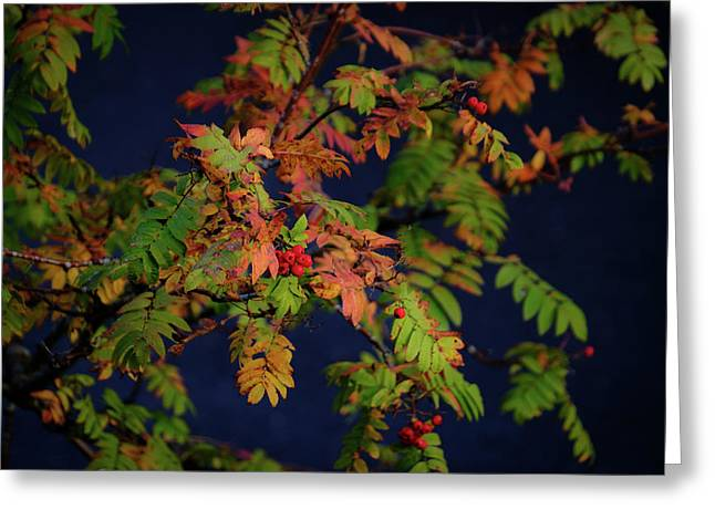 Greeting Card featuring the photograph Autumn Berries by RKAB Works