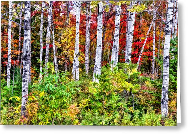 Greeting Card featuring the painting Autumn Birches by Christopher Arndt