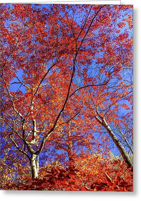 Greeting Card featuring the photograph Autumn Blaze by Karen Wiles