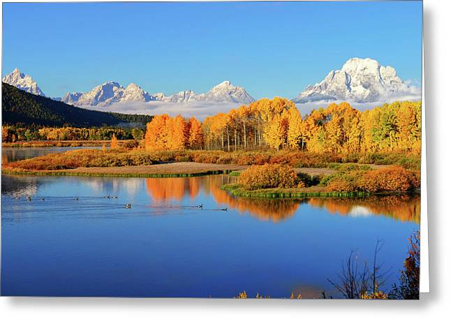 Autumn Blue And Gold Greeting Card