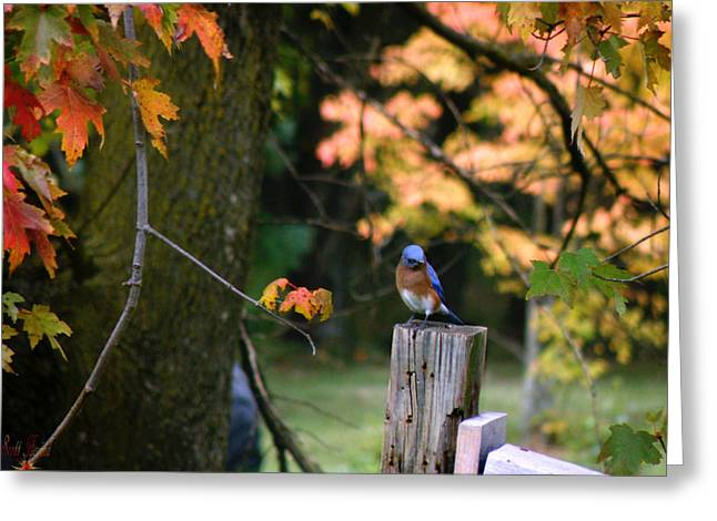 Autumn Blue Bird Greeting Card