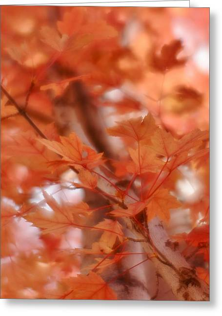 Greeting Card featuring the photograph Autumn Blush by Diane Alexander