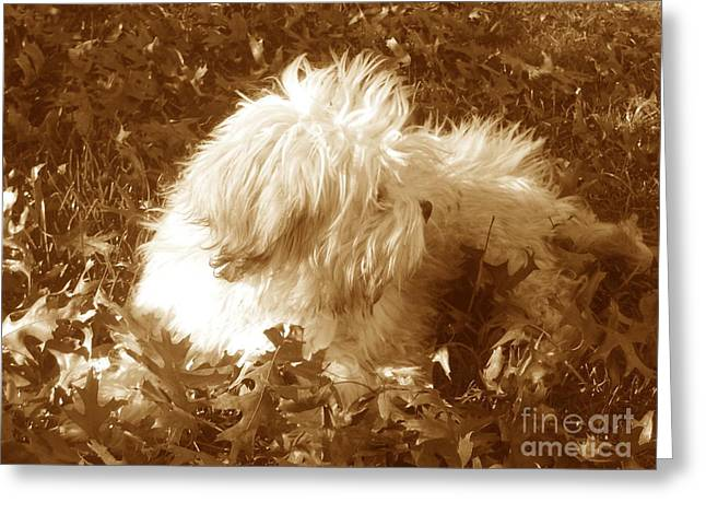 Autumn Breeze 2 Greeting Card
