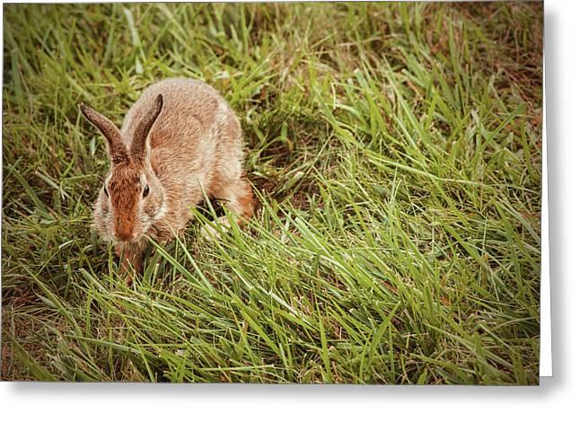 Autumn Bunny Greeting Card by Karol Livote