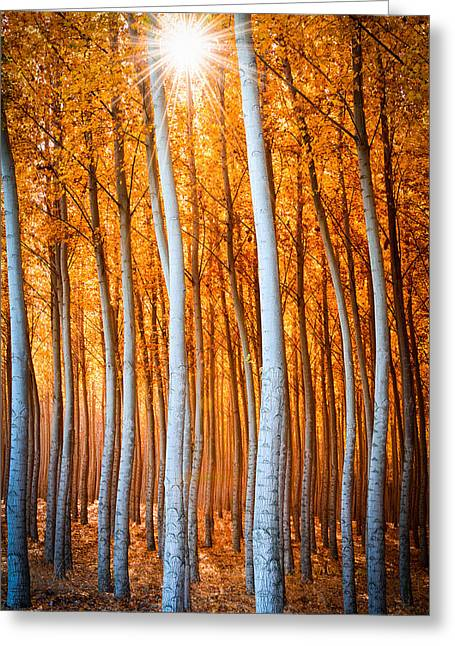 Greeting Card featuring the photograph Autumn Canopy Burst by Dan Mihai