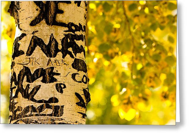 Autumn Carvings Greeting Card by James BO  Insogna