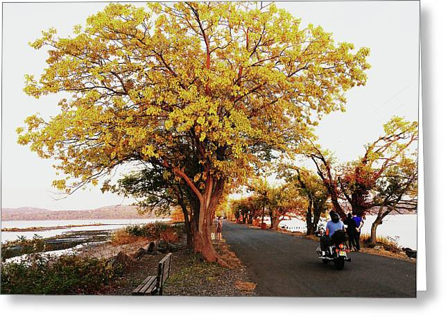 Autumn Causeway Greeting Card