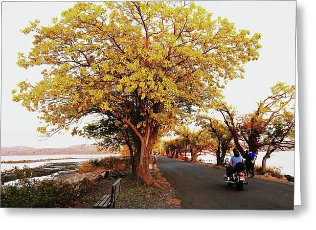 Autumn Causeway Greeting Card