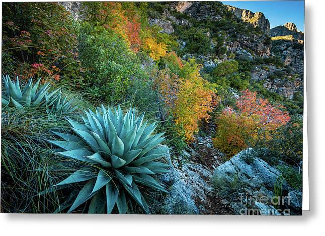 Autumn Century Plants Greeting Card by Inge Johnsson
