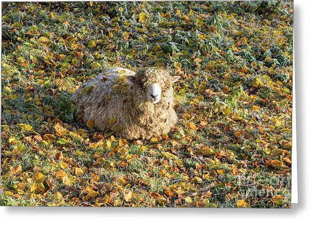 Autumn Chill Greeting Card by Tim Gainey