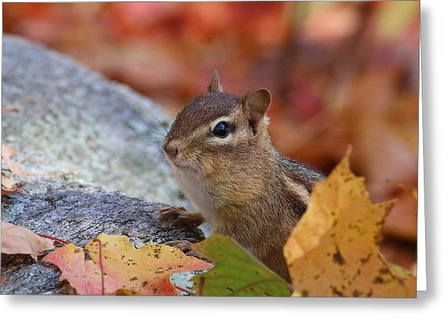 Autumn Chipmunk Greeting Card