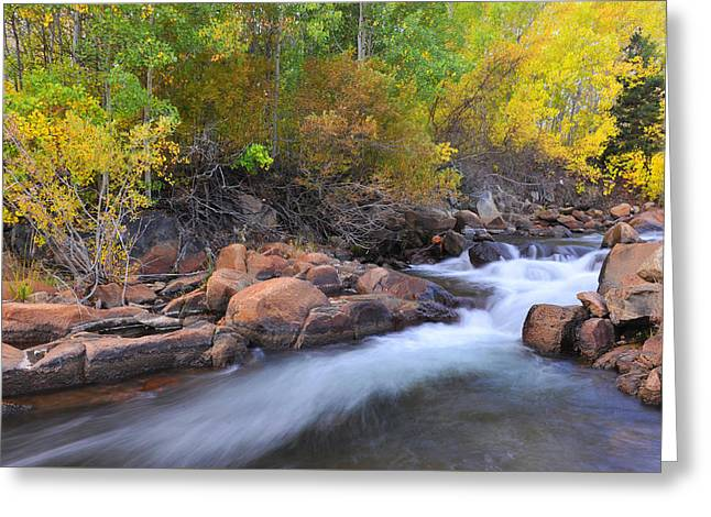 Greeting Card featuring the photograph Autumn Color In Bishop by Dung Ma