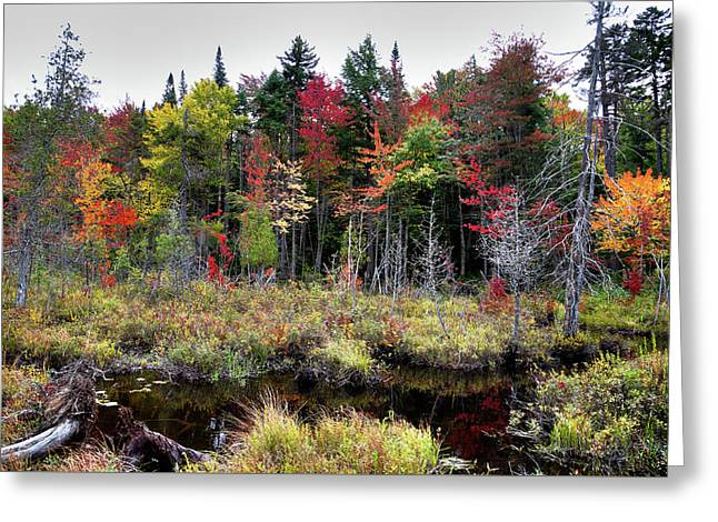 Greeting Card featuring the photograph Autumn Color In The Adirondacks by David Patterson