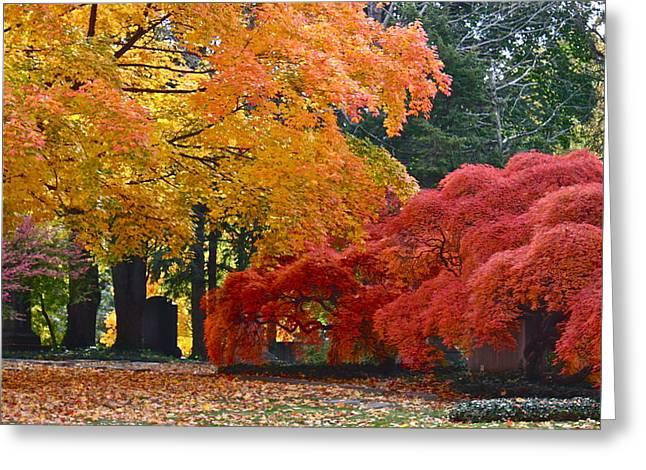 Mb Matthews Greeting Cards - Autumn Color Greeting Card by MB Matthews
