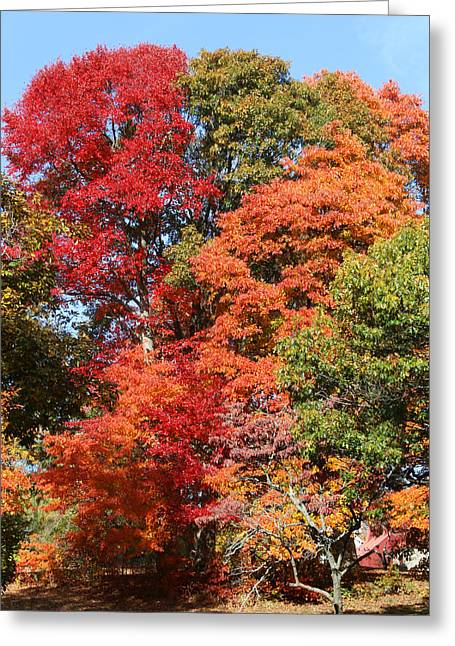 Autumn Color Spray Greeting Card