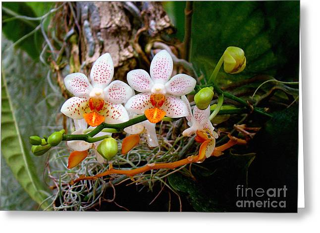 Autumn Colored Orchids Greeting Card by Sue Melvin