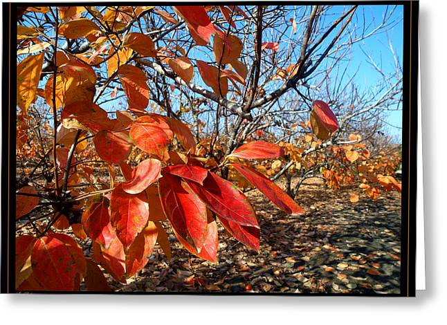 Autumn Colors 06 Greeting Card