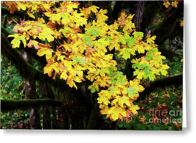 Autumn Colors Greeting Card by Bob Christopher