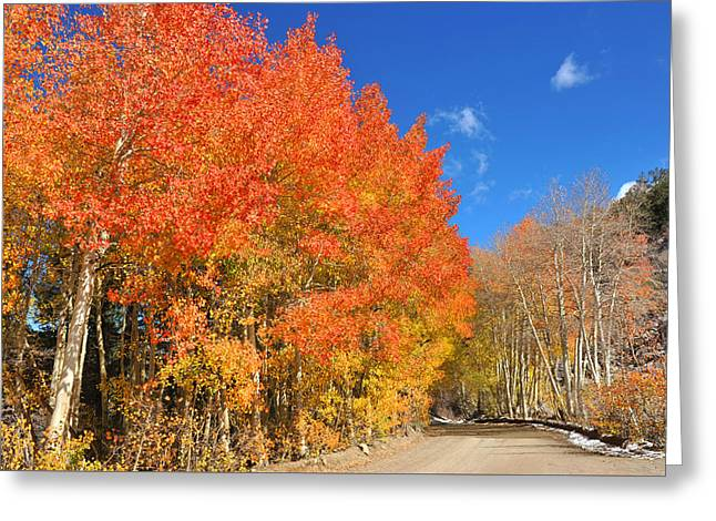 Greeting Card featuring the photograph Autumn Colors by Dung Ma