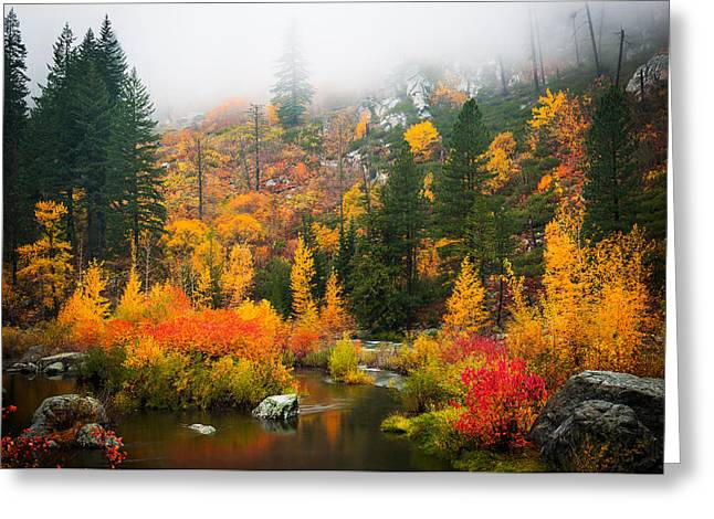 Greeting Card featuring the photograph Autumn Colors Symphony by Dan Mihai
