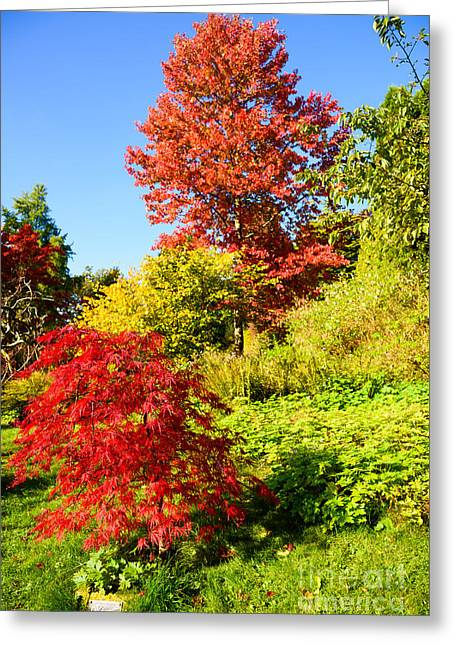 Autumn Colours Greeting Card by Colin Rayner