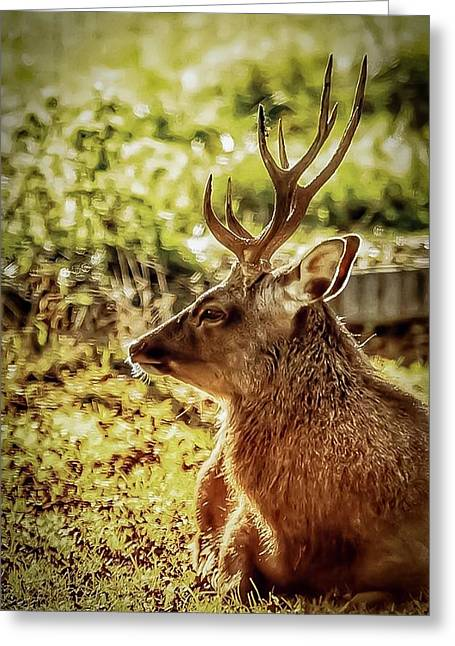 Greeting Card featuring the photograph Autumn Colours Stag by Cliff Norton