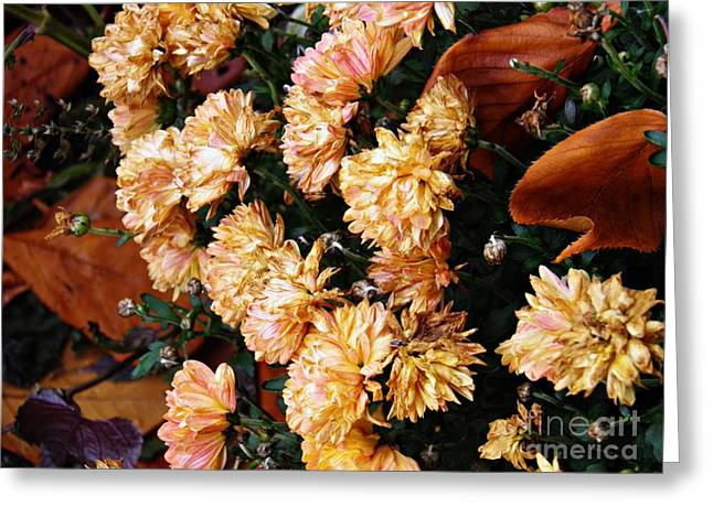 Autumn Comes To The Garden Greeting Card by Sarah Loft