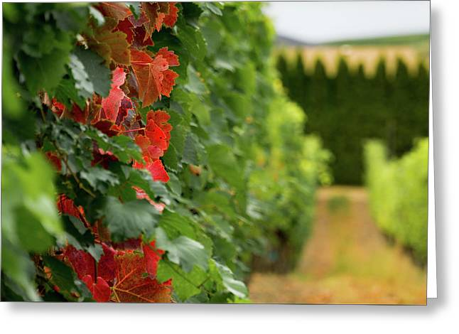 Autumn Comes To The Vineyard Greeting Card