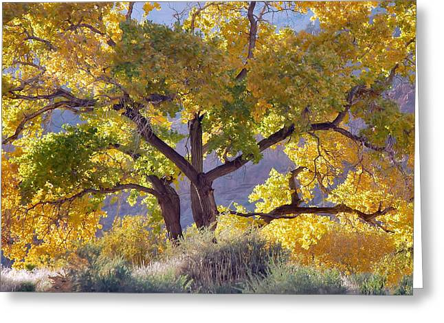 Autumn Cottonwood - Zion Greeting Card by Stephen  Vecchiotti