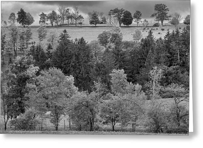Autumn Country Bw Greeting Card by Bill Wakeley