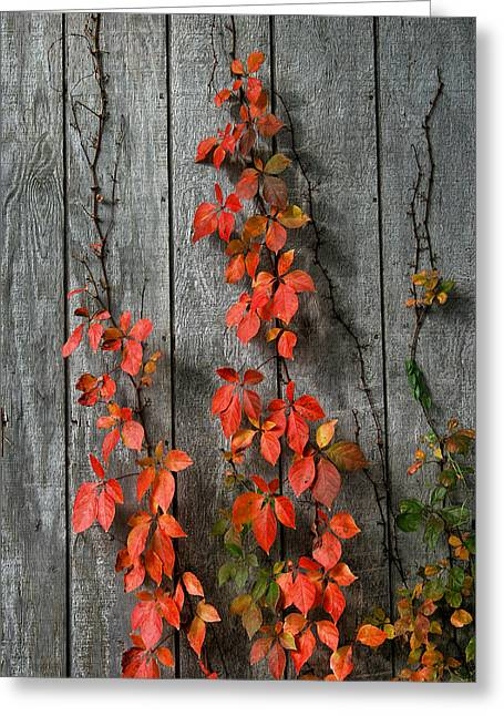 Autumn Creepers Greeting Card