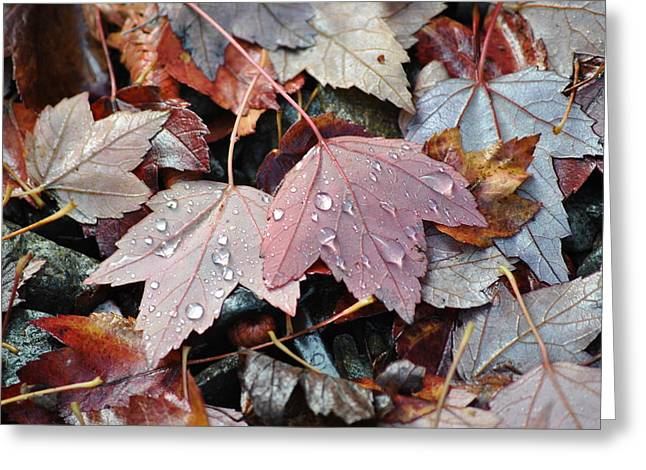 Autumn Cries Greeting Card