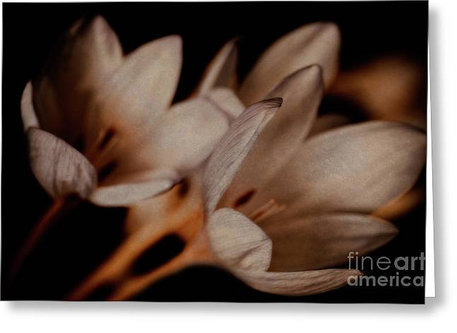 Autumn Crocus Greeting Card