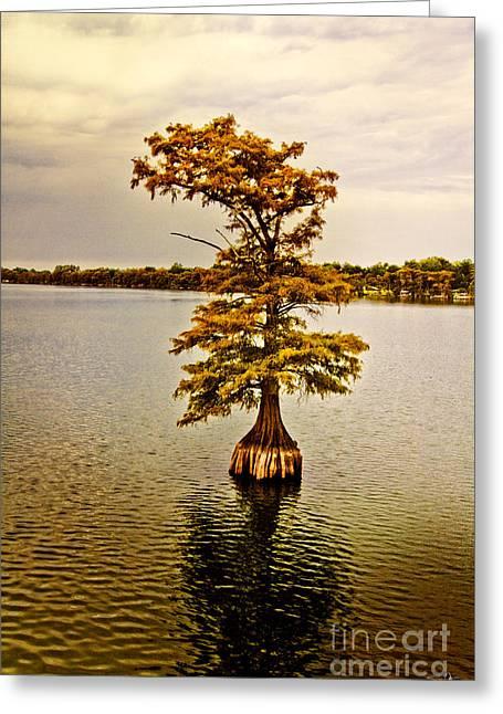 Autumn Cypress Greeting Card by Scott Pellegrin