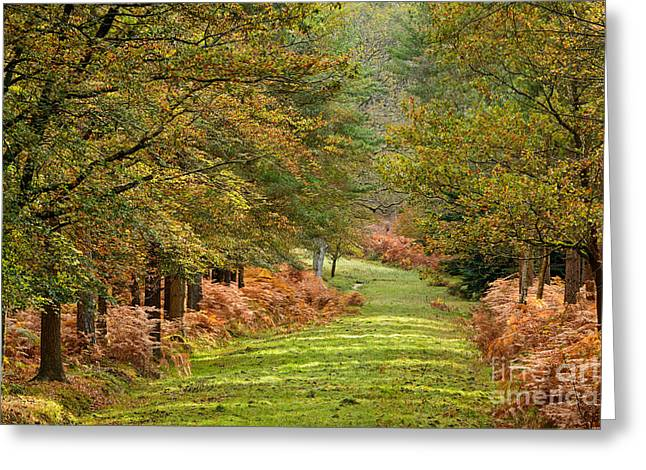 Autumn Dames New Forest Greeting Card