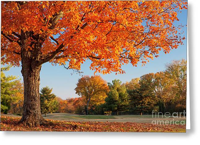 Autumn Dawn Greeting Card