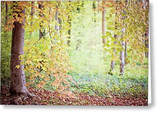 Autumn Dreams Greeting Card by Melanie Alexandra Price