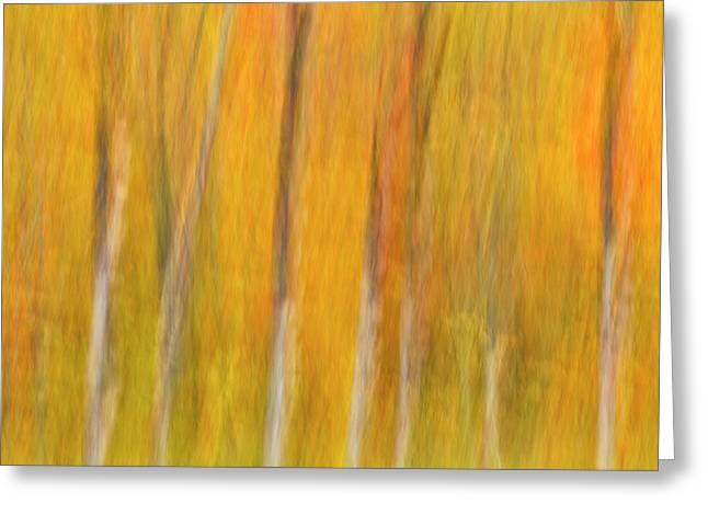 Greeting Card featuring the photograph Autumn Dreams by Mike Lang