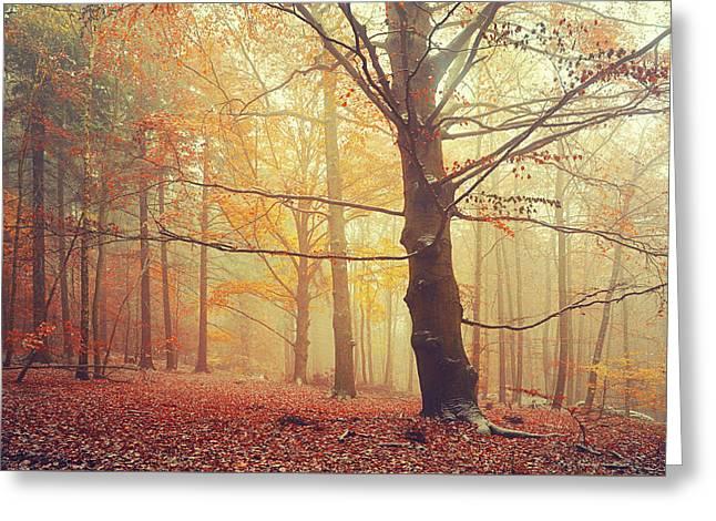 Autumn Dreams Of Oak Tree 1 Greeting Card by Jenny Rainbow