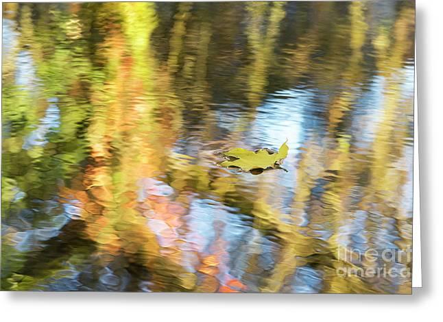 Autumn Drift Greeting Card