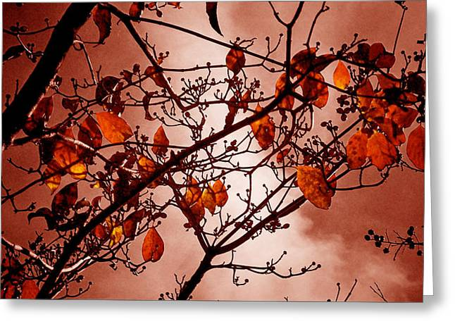 Autumn Ends Greeting Card by Russ Mullen