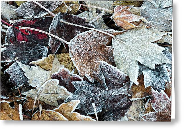 Autumn Ends, Winter Begins 1 Greeting Card