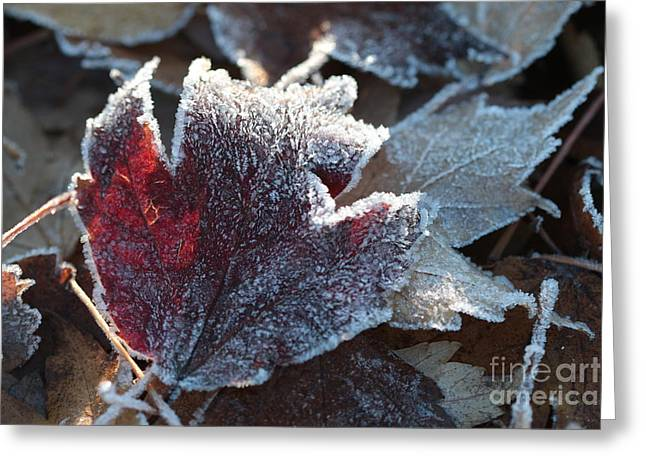 Greeting Card featuring the photograph Autumn Ends, Winter Begins 2 by Linda Lees