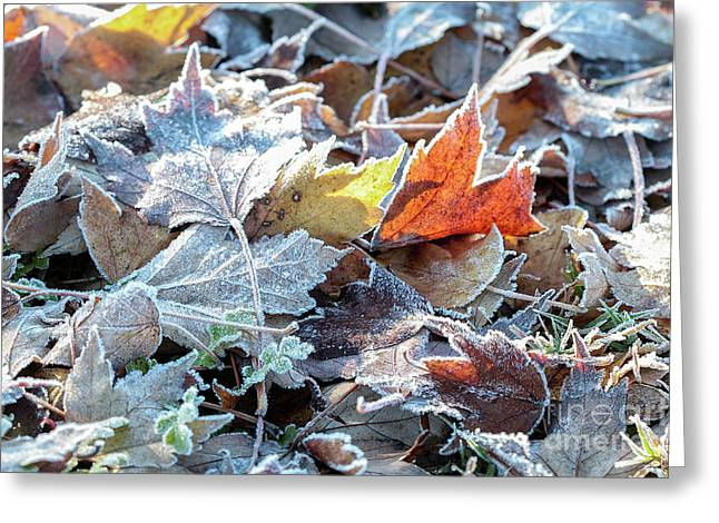 Greeting Card featuring the photograph Autumn Ends, Winter Begins 3 by Linda Lees