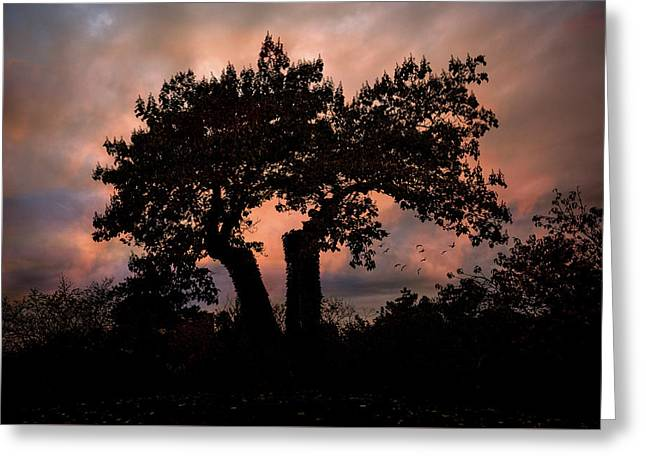 Greeting Card featuring the photograph Autumn Evening Sunset Silhouette by Chris Lord