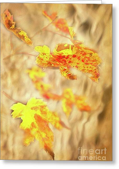Autumn Fall Color Maple Leaves In The Blue Ridge Ap Greeting Card by Dan Carmichael