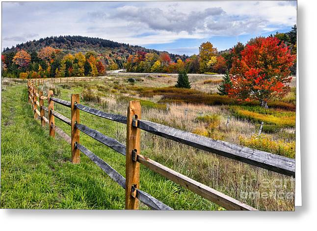Autumn Fall Colors Tree In West Virginia Meadow I Greeting Card by Dan Carmichael