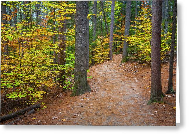 Greeting Card featuring the photograph Autumn Fall Foliage In New England by Ranjay Mitra